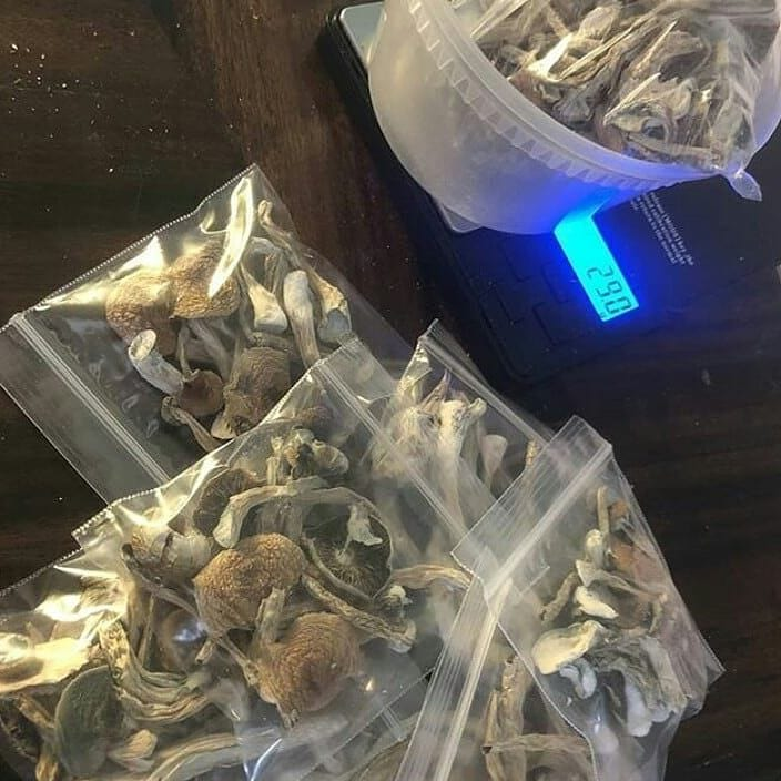 Golden Teachers Available Here Fast and Secure Shipping.where to Buy Golden Teacher Online Golden Teacher for sale order Golden Teacher mushrooms online