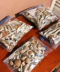 Penis Envy Mushrooms strains Available Here Fast and Secure Shipping.Penis Envy Shrooms Everybody's physiology Buy Albino Peny EnvyOnline