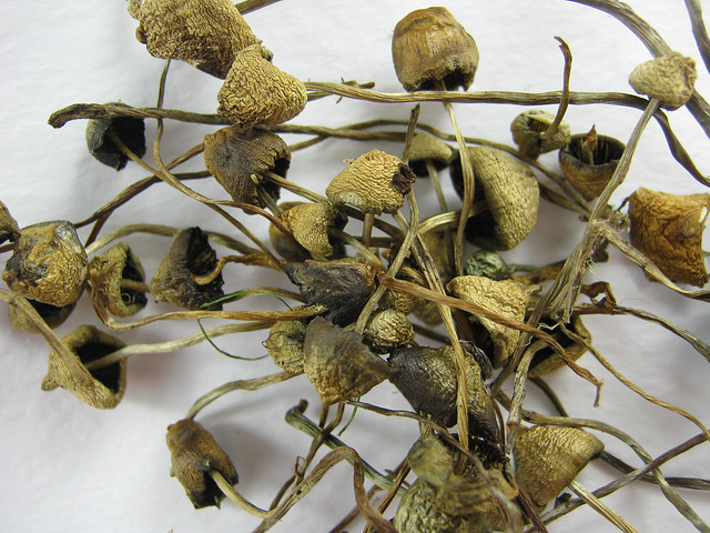 liberty-caps-magic-mushroom